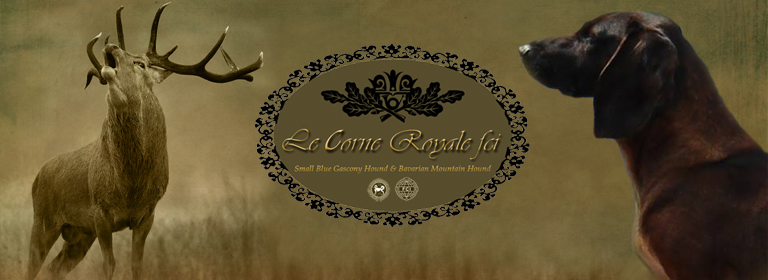 Le Corne Royale FCI
